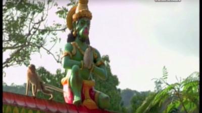 Vidéo Les animaux sacres en Inde