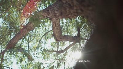 Vidéo Corporate - Blachère - Cover