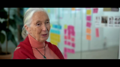 Vidéo Voice-Over Jane GOODALL